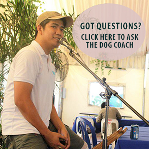 ask the dog coach